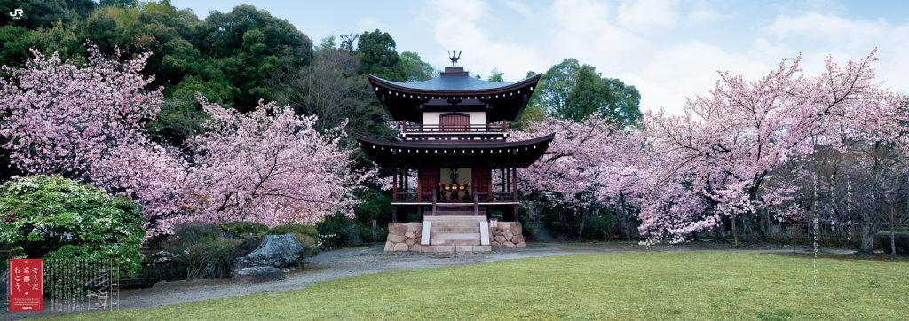 勧修寺 桜に囲まれた観音堂 ポスタービジュアル